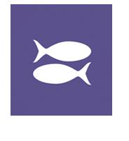 Logo Studienförderung Passo Fundo